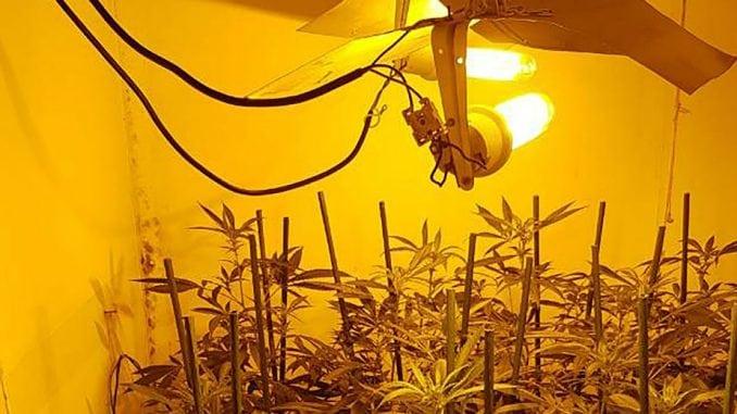 MUP: Pronađena laboratorija za uzgajanje marihuane 1