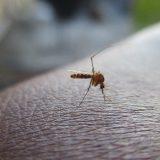 Zaprašivanje zbog najezde komaraca u Prokuplju 14