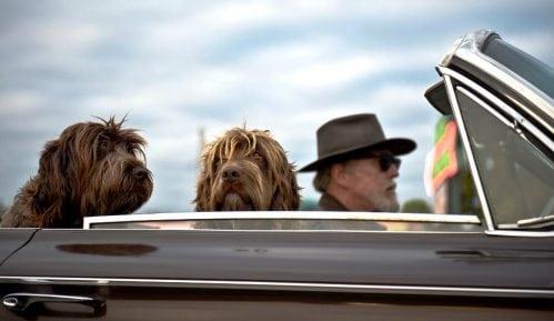 Šta je sve potrebno da biste putovali sa psom u zemlje EU? 11