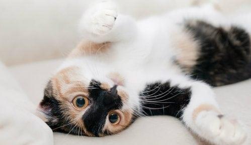 Koliko novca izdvojiti u odgajanju mačke? 13
