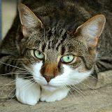 Koje su posledice udisanja dima kod mačaka? 5