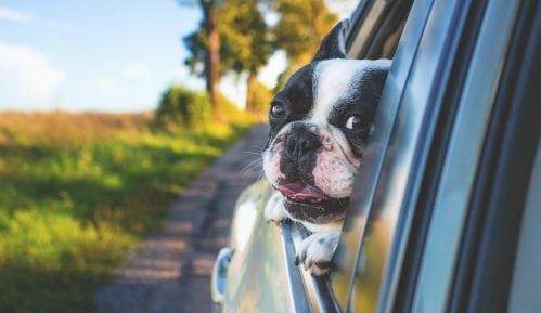 Vozila na suncu - opasnost za decu i kućne ljubimce 7