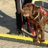 Nema instruktora, Astor jedini pas vodič 8