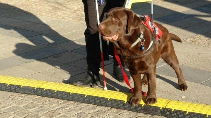 Nema instruktora, Astor jedini pas vodič 2
