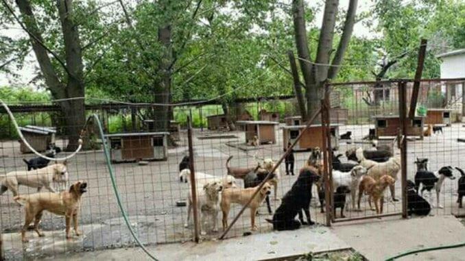 Apel Vladi da se bavi i nasiljem nad životinjama 2