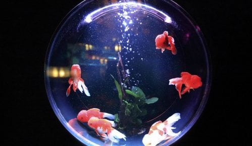 Koliko košta akvarijum od 100 litara? 6