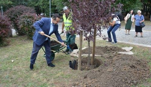 Dačić zasadio prvo od 30 stabala japanske trešnje ispred Muzeja Jugoslavije 9