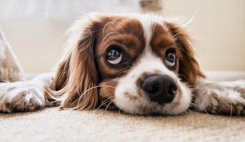 Zašto pas povraća i šta raditi u tom slučaju? 8