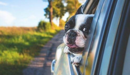 Kako da izbegnete alergije na žitarice kod pasa? 7