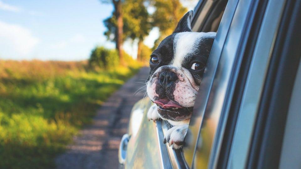 """Koje rasa pasa su pogodne za ljubimce ukoliko imate """"alergiju na pseću dlaku""""? 1"""