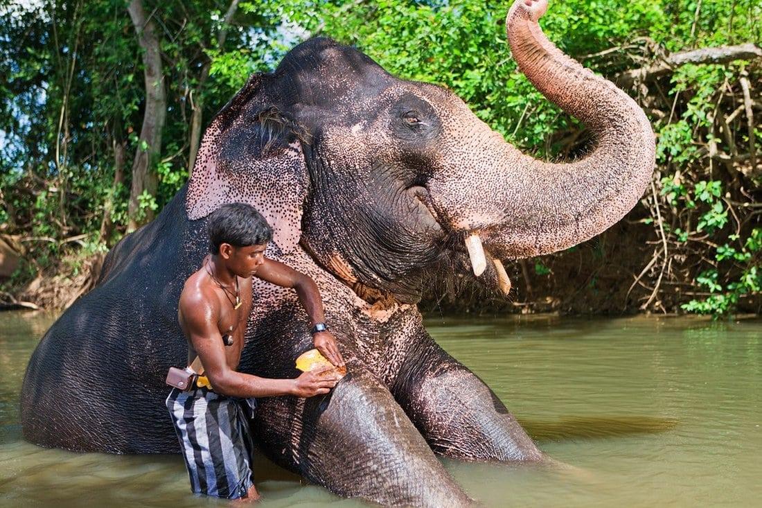Dečak na Šri Lanki kupa slona