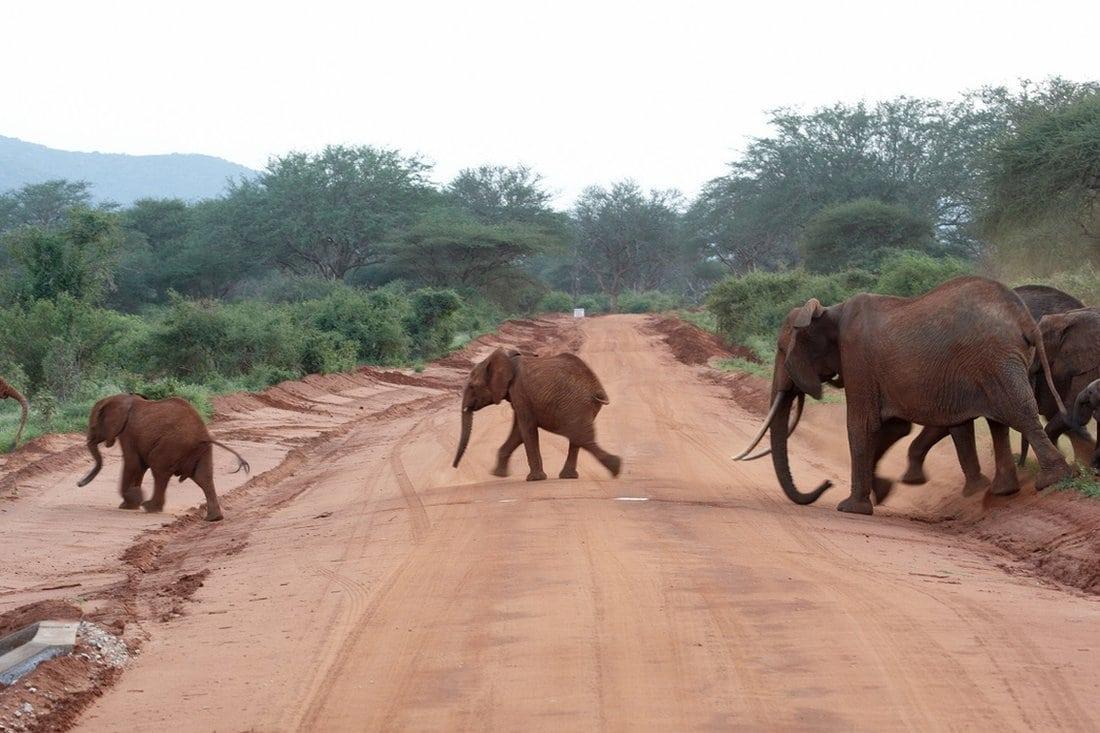 Slonovi beže od lava