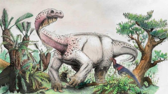 Pronađena kost dinosaurusa teška pola tone 1