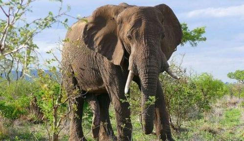 Zombi gen, zaštitnik slonova 10