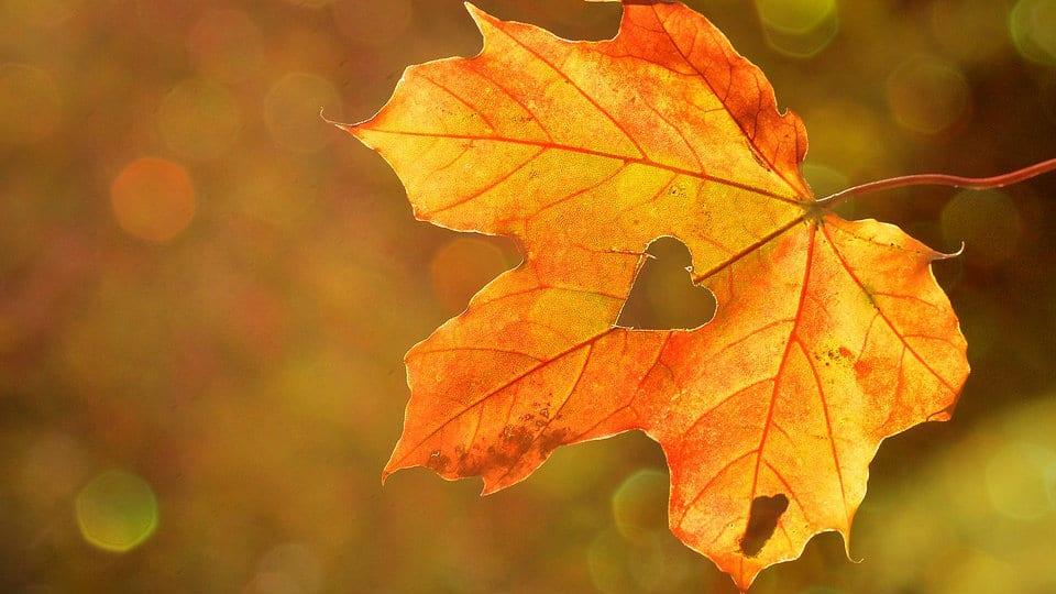 Zašto je jesen pravo vreme za novi početak? 1