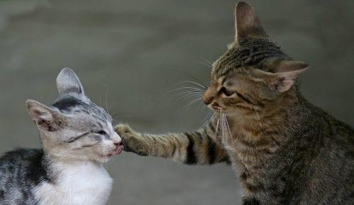 Situacije kod mačaka koje zahtevaju hitnu pomoć 15