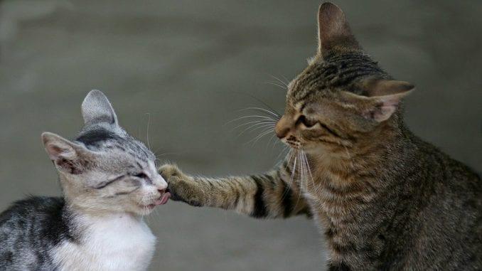 Situacije kod mačaka koje zahtevaju hitnu pomoć 1