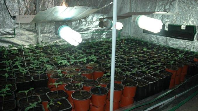Policija otkrila u Smederevu laboratoriju za uzgoj marihuane 1
