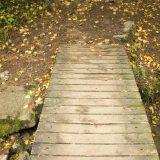 Utiče li jesen na naše zdravlje? 12