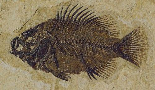Pronađen fosil ribe star 150 miliona godina 9