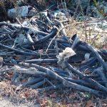 Divlja deponija kod Pančevačkog mosta (FOTO) 3
