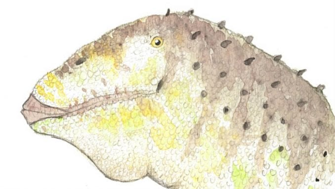 U Argentini otkrivena nova vrsta dinosaurusa 3