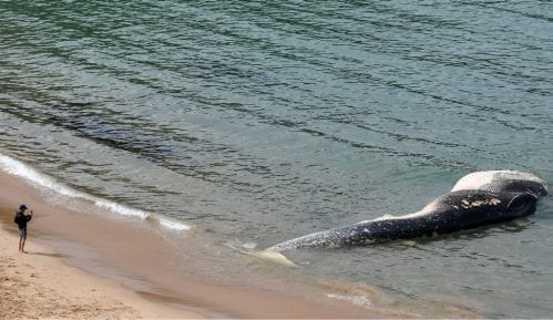 U telu kita pronađeno 40 kilograma plastičnih kesa 3