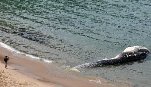 U utrobi uginulog kita našli šest kila raznog otpada 14