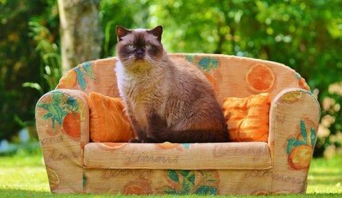 Kako pomoći mački nakon gubitka drugog ljubimca? 15