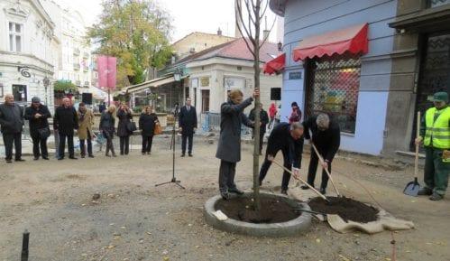 Zasađeno deset stabala u Skadarskoj i Ulici Emilijana Josimovića 14