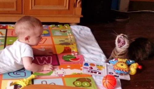 Mačke i bebe: Beba je stigla, ŠTA SAD? 14
