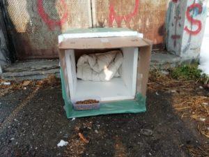 """U Batajnici pokrenuta """"Akcija za napuštene pse"""" (FOTO) 4"""