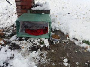 """U Batajnici pokrenuta """"Akcija za napuštene pse"""" (FOTO) 6"""