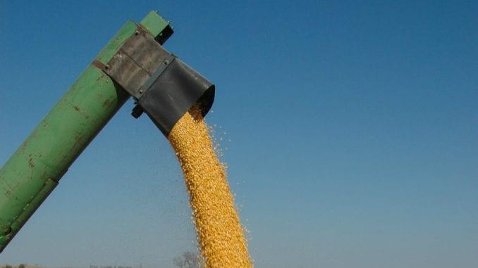 Počela berba kukuruza u Toplici uz rekordan rod 2