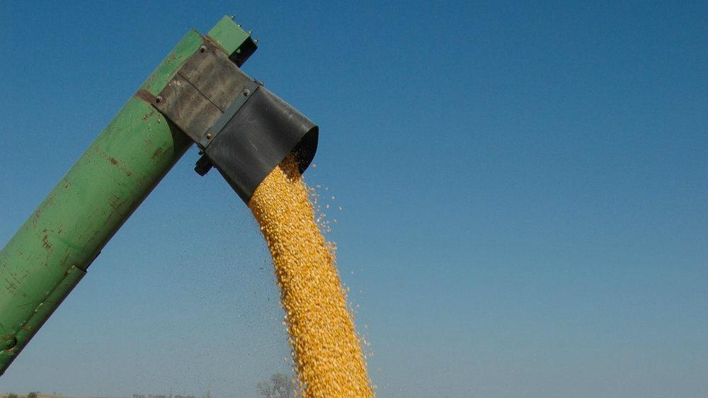 Rana setva kukuruza mora da se ponovi u Srbiji, a deo poljoprivrednika kasni 1
