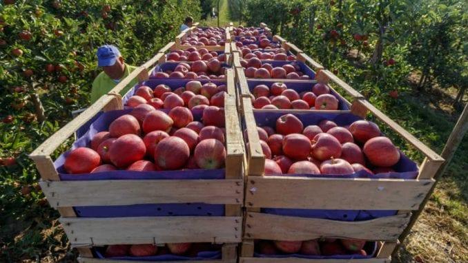 Poljoprivrednici zakinuti za oko 11,41 milijardu dinara 2