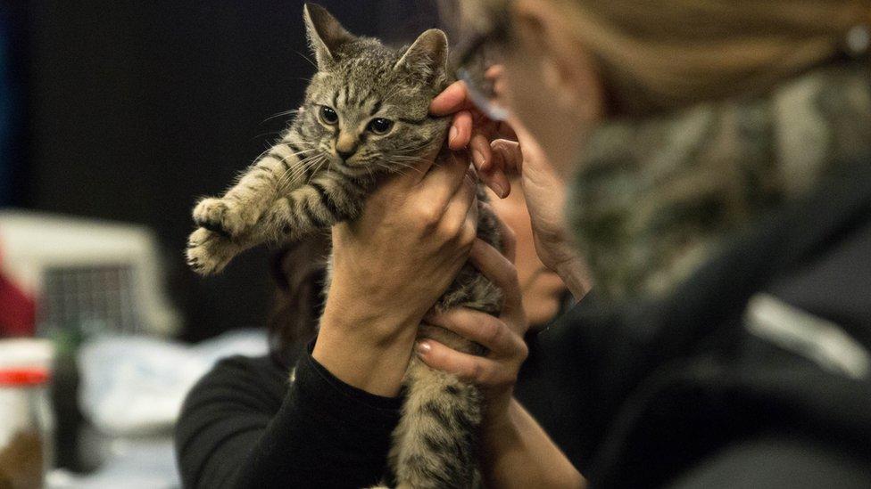 Mačka u rukama