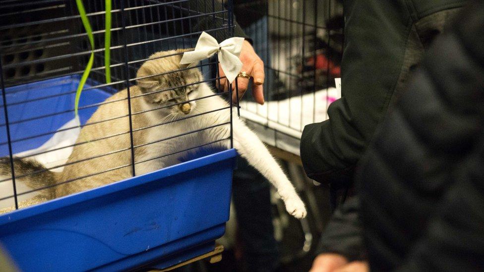 Maca u kavezu
