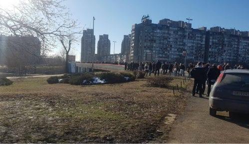 Zelena stranka: Beogradu treba milion stabala novog drveća 10