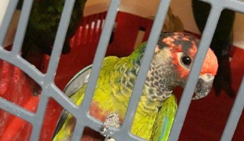 Sprečeno krijumčarenje zaštićenih papagaja 15