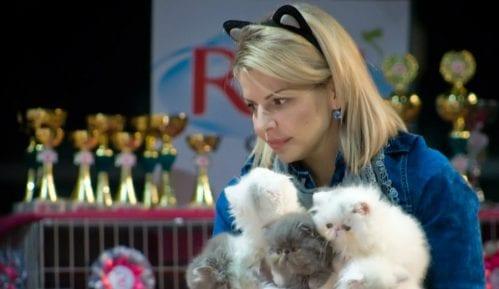 Novogodišnji mačkenbal na Mrnjau Festu 12. i 13. januara 12
