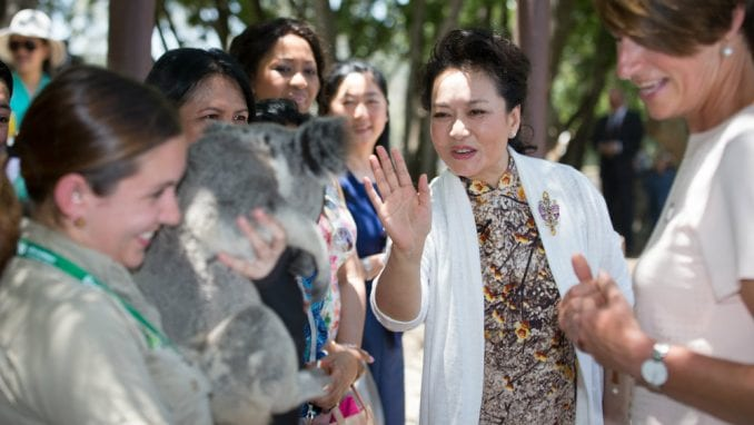 Kuce, pande, konji, kornjače, slonovi u službi diplomatije 1