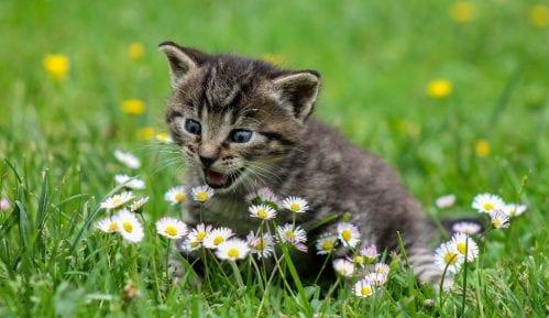 Šta vaša maca sme da gricne iz vašeg tanjira, a šta nikako? 4