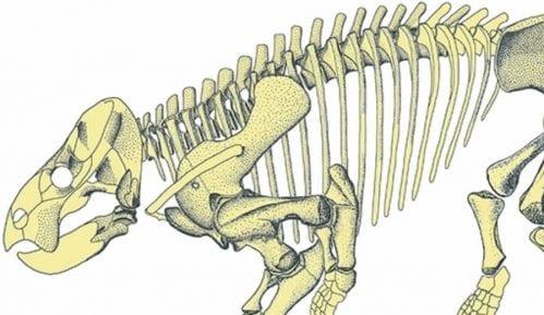 Otkriven džinovski rođak sisara (1. deo) 3