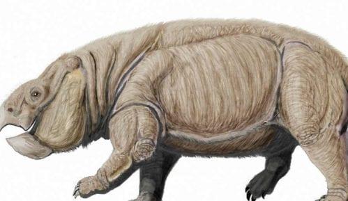 Otkriven džinovski rođak sisara (2. deo) 2
