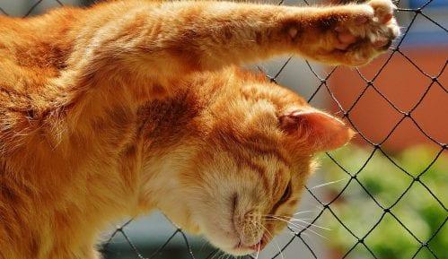 Mačka vam je uznemirena, kako da je smirite? (VIDEO) 2