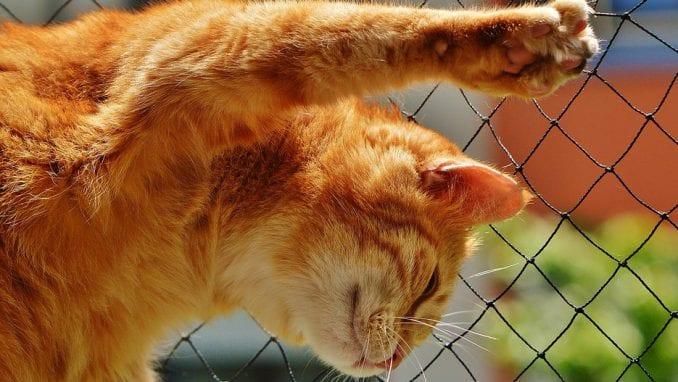 Hirurško uklanjanje kandži kod mačaka: Surovo ili opravdano? 1