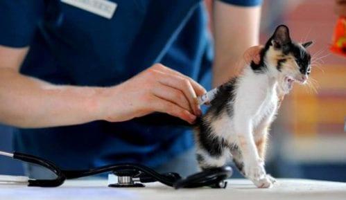 Kada treba voditi mačku kod veterinara? 13