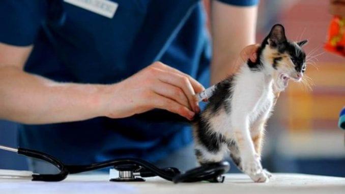 Kada treba voditi mačku kod veterinara? 1