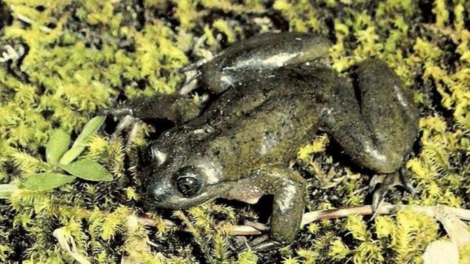 Kako je najusamljenija žaba na svetu prestala to da bude (1. deo) 1